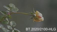 Frabraum BT.2020